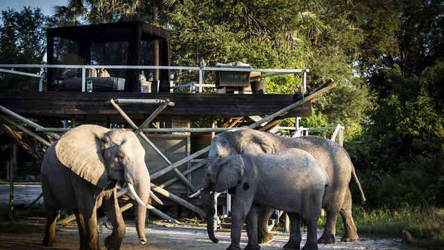 Elephant Interaction at Abu Camp