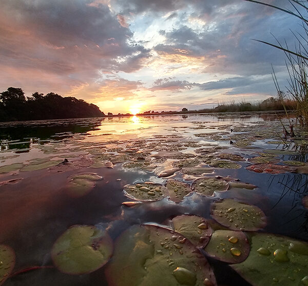 Okavango Delta, sunset & raindrops